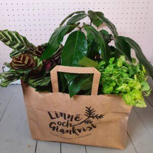 Linné och Grankvist Växtkassen
